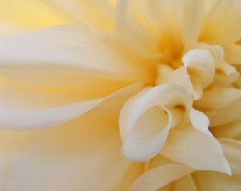 Photography - Glow - 5x7 Abstract Floral Photograph - Butter Cream Dahlia - IN STOCK