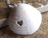 LL Cool Shell - Sea Shell Jewelry - Eco Love Necklace