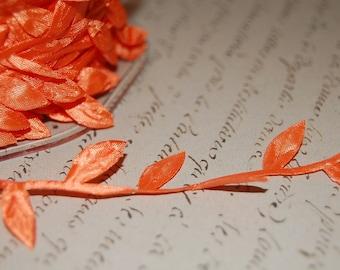 Orange Ribbon of Leaves and Trailing Vine Trim