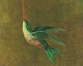 "PRINT - ""Audubons Hummingbird"", 8x10, bird, wall decor, vintage bird"