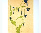 Nodding Blue Lily - one of 15 colour woodblock prints