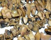 Natural Tiger Coral Beads