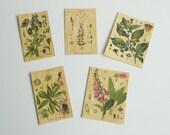 Botanical Posters Set 1 Dollhouse Miniature