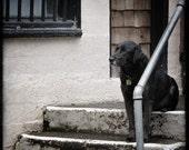 Black Dog Waiting Patiently TTV 5x5 Metallic  Print