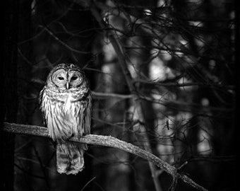 The Owl TTV 12x12 Metallic Print