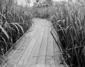 Gulf Coast Donation Black and White Paths Plants Wild National Park Photographs Louisiana New Orleans Barataria Preserve Marrero