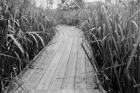 Decor Travel Path Plants Wild National Park Photographs Louisiana New Orleans Barataria Preserve Marrero