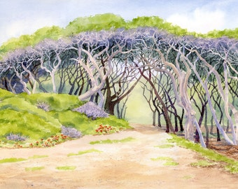Canopy of Weathered Trees at Fort Fisher giclee