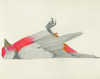 Lisa Congdon - Mort Archival Bird Art Print