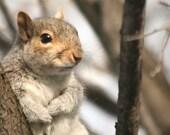 Squirrel art, animal nursery, woodland decor, animal photography, boys nursery art, kids wall art - The Heart Warmer,  5x7