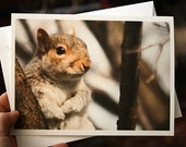 Cute Animal Card, love greeting card, squirrel photo, Anniversary card for boyfriend, for girlfriend - The Heart Warmer