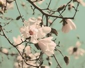Magnolia Picture, flower photography, nature photography, mint decor, large photograph sales - White Whispers - 11x14 Lustre Photo Print