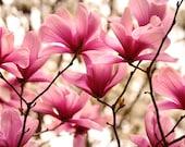 pink flower photography - art for girls room, magenta magnolia, pink bedroom decor, girls bedroom art, nature photography