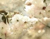 Cherry Blossom Art, bedroom wall art, flower photography, dreamy photography, White Bedroom Decor
