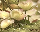 Flower photography, Bedroom Print, bedroom photo, bedroom decor, Floral bedroom art, dogwood