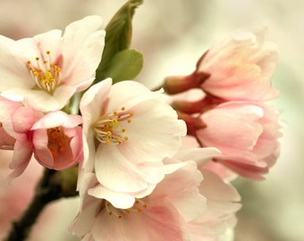 cherry blossom photo, pink bedroom decor, flower photography, floral bedroom art