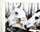 "Art Photography Two Shabby Horses...Original Art Photo Print (20.5"" X 16.5"" White Matted Framed Photograph)By Becky Carney"
