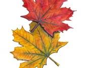 Original Acrylic Painting - Autumn Maple Leaves