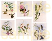 HUMMINGBIRDS from Antique Prints...Beautiful in Pastel... Digital Collage Sheet