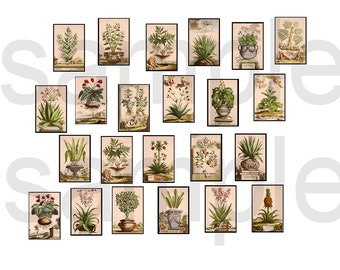 Altered 18th Century Botanicals  Cherubs  Aloe  Vases  1 x 1.5 inch for Dominoes Digital Collage Sheet
