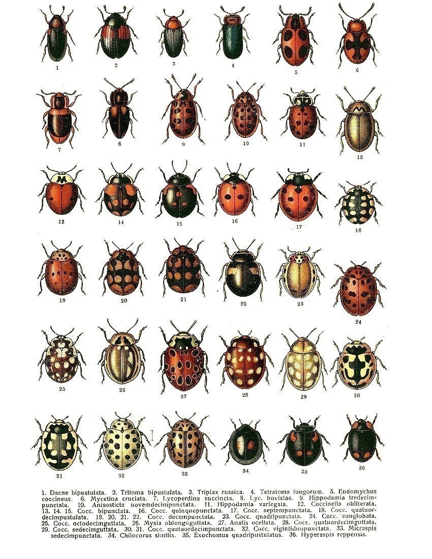 Insects Names on Frog Life Cycle Printable