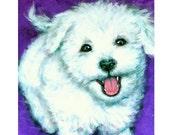 Bichon Dog Art Print, Painting by Dottie Dracos, Bichon on Purple