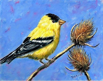 American Goldfinch Bird Art Print by Dottie Dracos, American Goldfinch on Blue