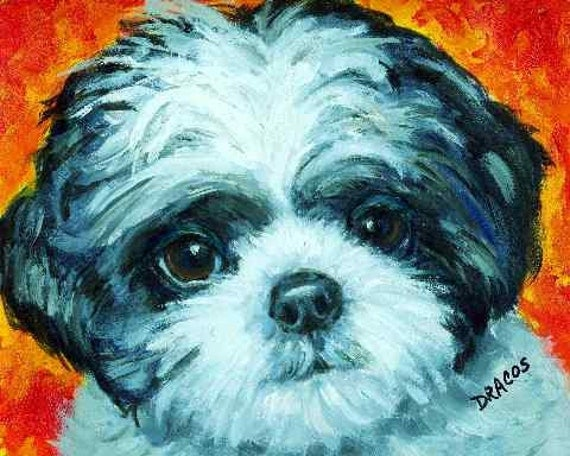 Shih Tzu Puppy Dog Art 8x10 Original Acrylic Painting By