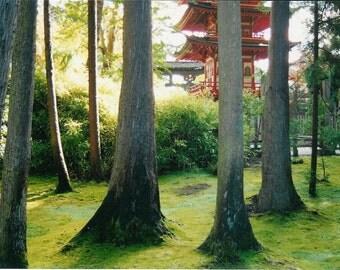 San Francisco Japanese Tea garden Photograph