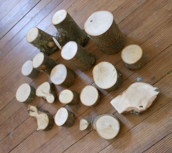 Tree Branch Blocks Natural Magnolia Branch By