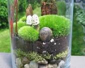 Terrarium,  Made to Order Terrarium,  Large Medium or Small Terrarium