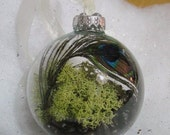 Living Terrarium Ornament,  Reindeer Moss, Coffee Beans and PEACOCK Feather