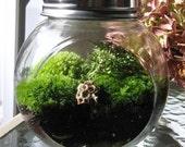 Garden in a JAR,  MOSS TERRARIUM,