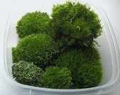 Terrarium, Moss,  For Your Planters and Terrariums