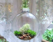 Moss Terrarium      Live Moss Inside of a Glass Tree Ornament  A Truly Unique Gift