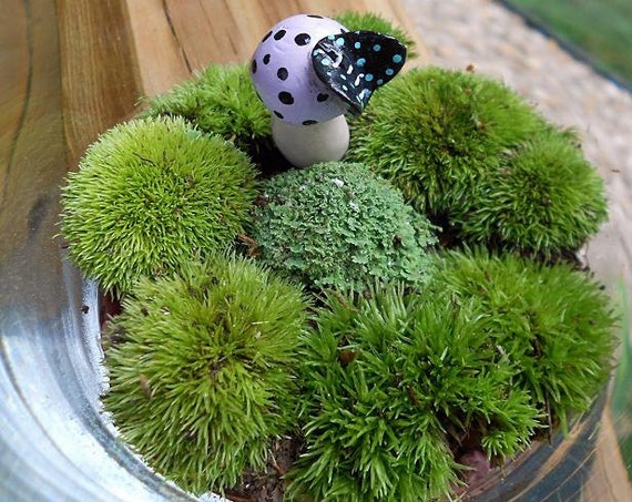 Moss Terrarium,  with Little BUTTERFLY On Top of Toadstool, Live Moss, Mothers Day Gift