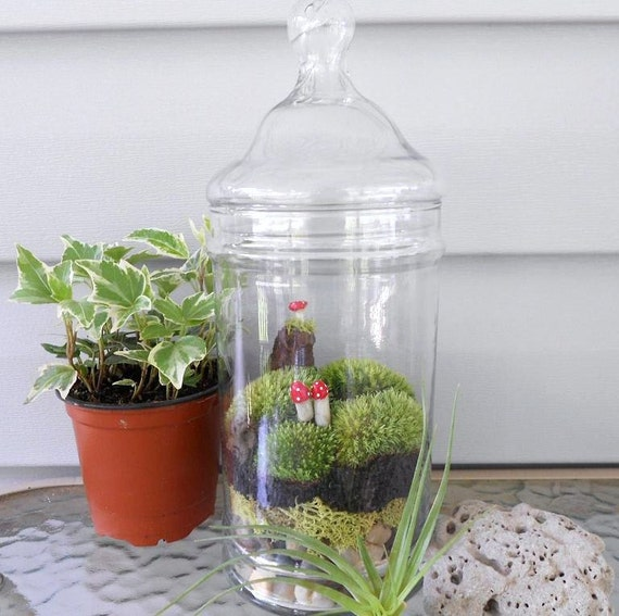 Moss Terrarium,APPALACHAIN MEMORIES,  Glass Apothecary Jar, 3 Little Mushrooms,  Great Gift, for Your Home, Office, School, or Shop