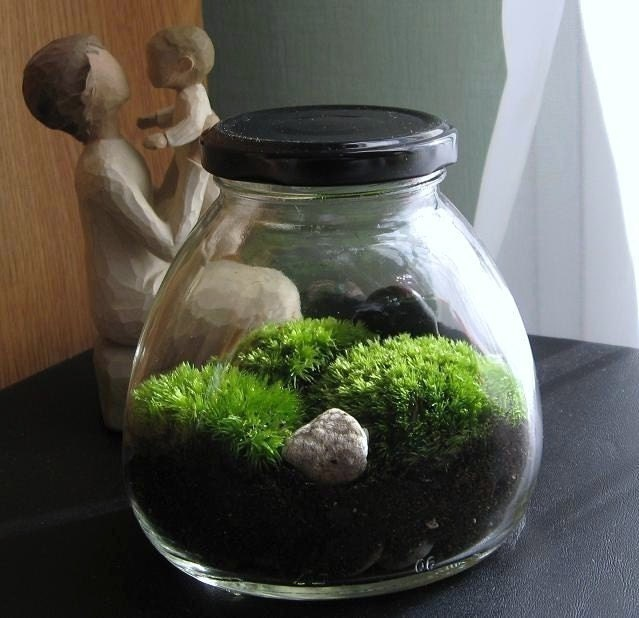Zen moss garden terrarium inside of a vintage art deco jar for Deco jardin miniature
