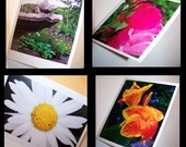 You pick...a set of any four original photo notecards by K. Shelton.