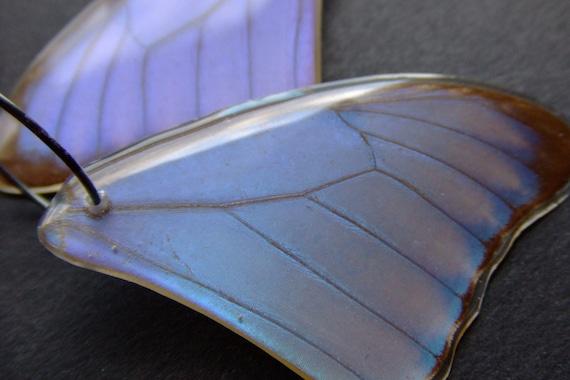 REAL preserved MORPHO AURORA butterfly wing hoop Earrings by Bela Brazilian Designs
