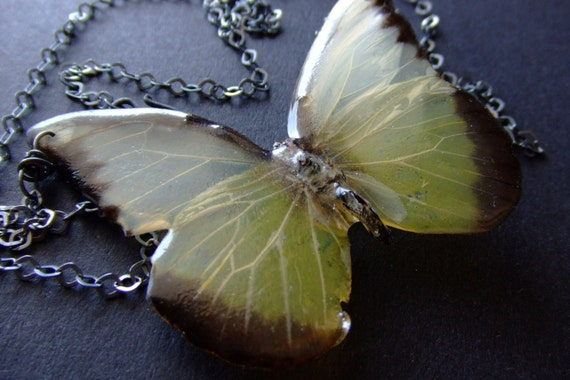 real preserved Brazilian butterfly necklace by BelaBrazilianDesigns