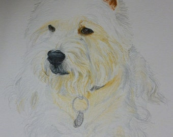 West Highland White Terrier Memorial Watercolor Portrait U Provide The Picture or Idea Made to Order 9 x 12 inch by Pigatopia