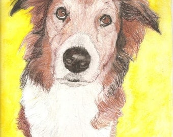 Collie Pet Portraits Original Watercolor Memorial U Provide Picture or Idea 9 x 12 inch by Pigatopia