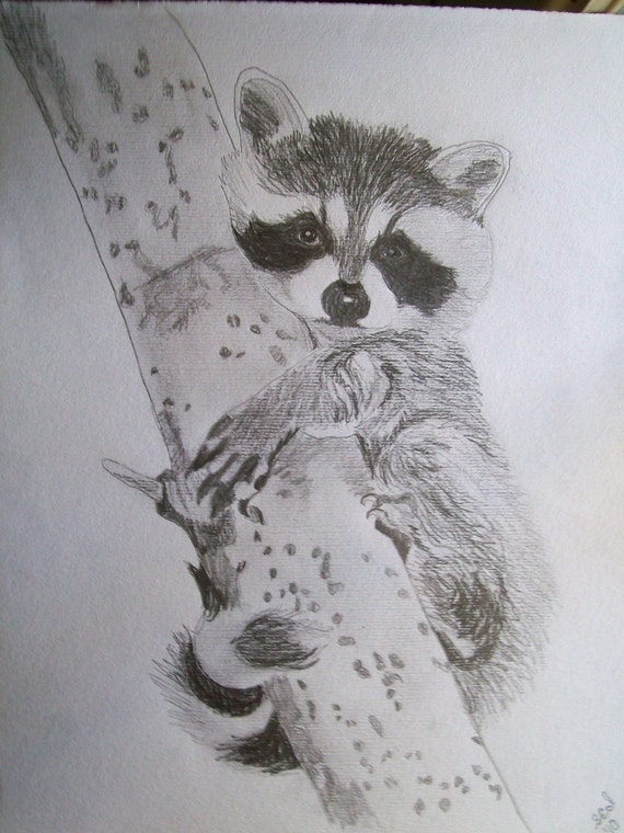 Items similar to Raccoon Portrait Pencil Sketch 9 x 12 U ...