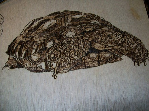 Tortiose Pet Portrait Original Pyrography You Provide Picture or Idea I Will Wood Burn for U 24 inch x 24 inch by Pigatopia