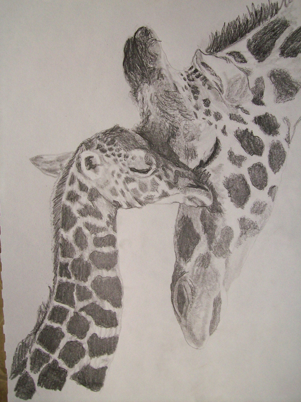 Giraffe Portrait Pencil Sketch 9 x 12 inch U Provide PictureCool Giraffe Drawings