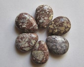 6 Appaloosa Jasper 21x15 Teardrop Beads