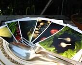 Greenmarket Sampler Platter 5
