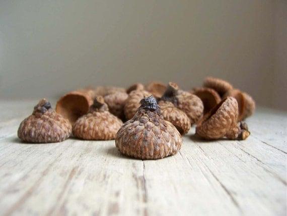 50 Natural Acorn Caps