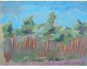 Pinewoods in Blue Original Pastel Drawing, Plein Air, 16x12